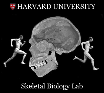 Harvard Skeletal Biology