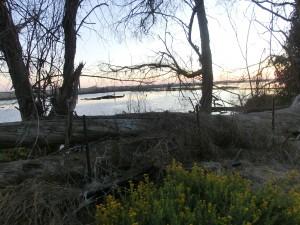Bolsa Chica Wildlife Preserve wetlands