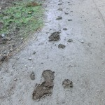 Footprints in the mud