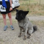 LionDog (2011 May 13-15) Born to Run Ultramarathons, Los Olivos CA