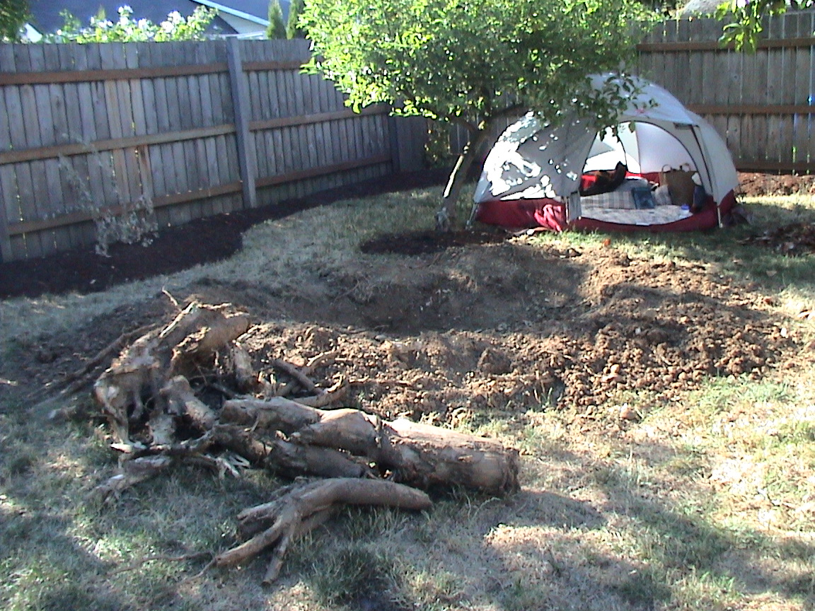 Ken Bob's campsite behind the removed tree stump
