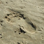 Bernard's footprint
