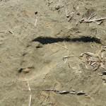 Ken Bob's footprint