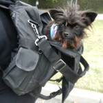 Dog backpacker
