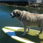 PsychoHerman.com on paddleboard