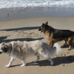 Psycho Herman and another new friend at Dog Beach