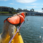 Herman kayaking in Huntington Harbor