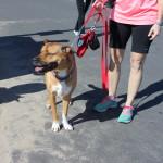 Dog running barefoot