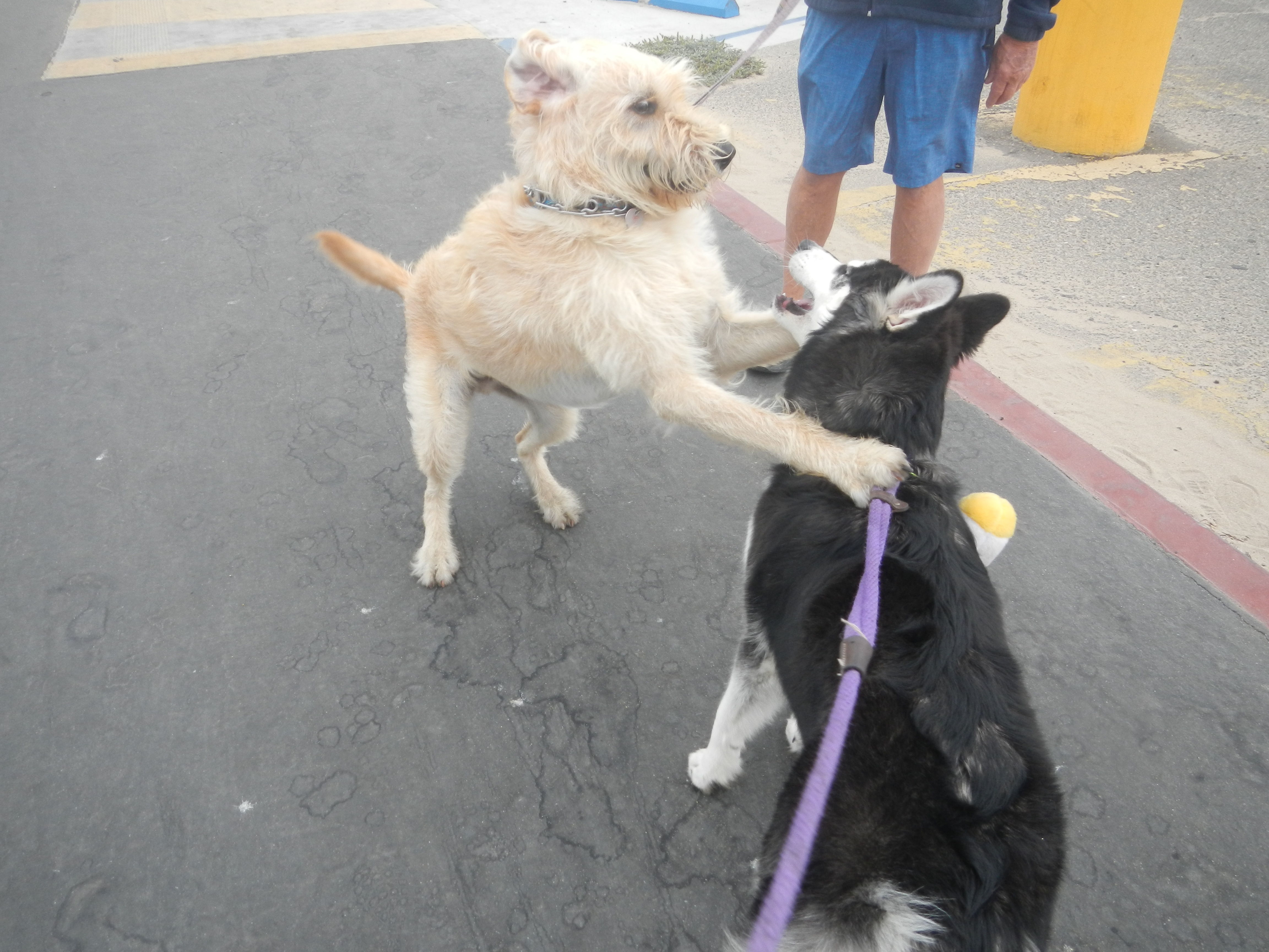 Kay found several dogs and excuses to stop and play along the way