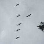 Either the Blue Angles, or a flock of pelicans did a fly by to commemorate International Barefoot Running Day